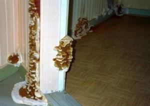 infection mérule appartement